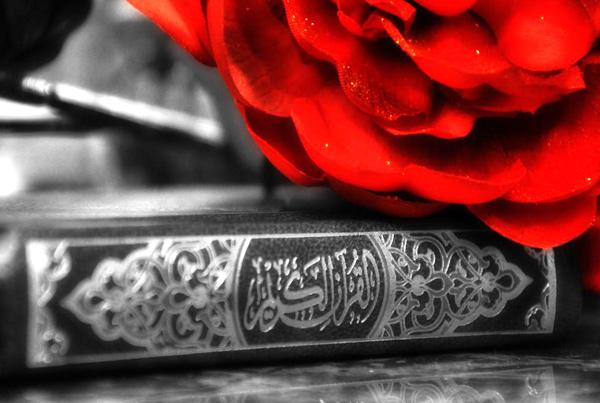 quran red rose
